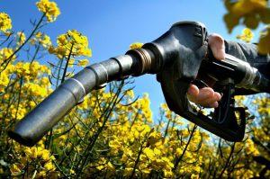 Индия намерена снизить зависимость от закупок нефти и топлива за 5 лет на 10%