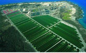 ЕК одобрена итальянская схема господдержки развития сферы биотоплива на €4,7 млрд
