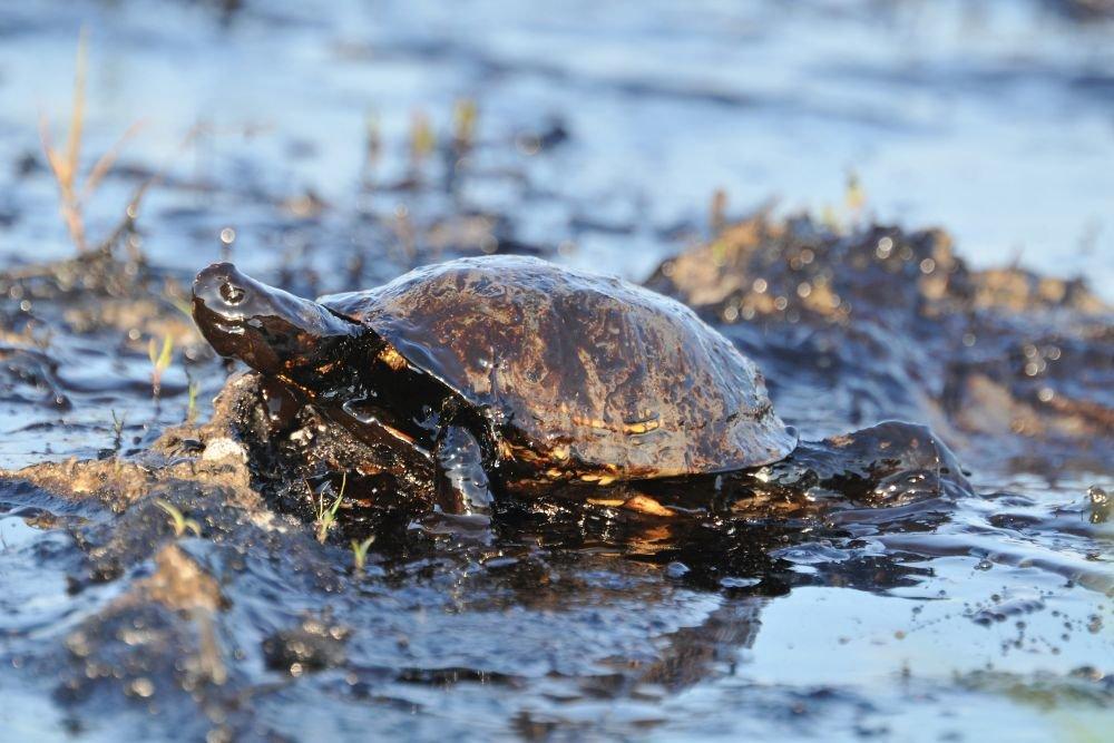 На пляжах Бразилии собрали свыше 525 т нефти и загрязненного нефтью песка