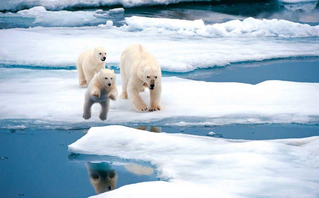 Законопроект о преференциях для инвесторов в Арктике в Госдуму внесут в следующем феврале